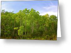 Stand Of Quaking Aspen Trees Greeting Card