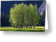 Stand Of Trees Yosemite Valley Greeting Card