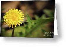 Stand Out - Dandelion Greeting Card