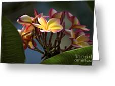 Stand Out In The World Greeting Card
