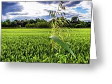 Standing Above The Crop Greeting Card
