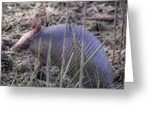 Standing Armadillo Greeting Card