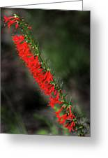 Standing Cypress Greeting Card
