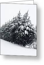Standing Guard In Snow Greeting Card