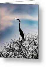 Standing High - Silhouette Greeting Card