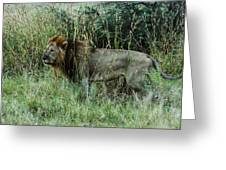 Standing Lion Greeting Card