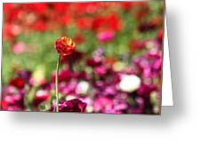 Standing Out Above The Crowd Greeting Card