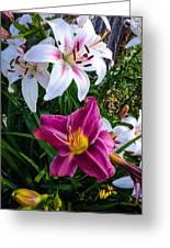 Standing Out In A Crowd Greeting Card