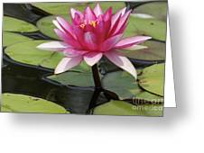 Standing Tall In The Pond Greeting Card
