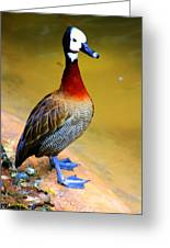Standing Tall Greeting Card by Nick Gustafson