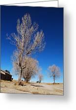 Standing Tree  Despite Greeting Card