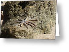 Star Fish On The Rock Greeting Card