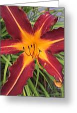 Star Flower Greeting Card