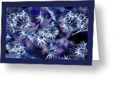 Star Flowers Greeting Card