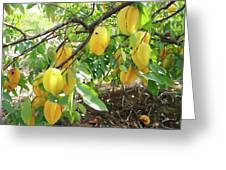 Star Fruit Belongs To The Plant Family Greeting Card