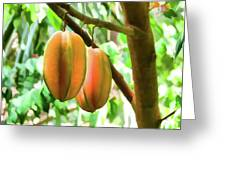 Star Fruit On The Tree Greeting Card