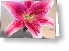 Star Gaze Lilly Greeting Card