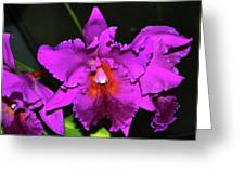 Star Of Bethlehem Orchid 006 Greeting Card