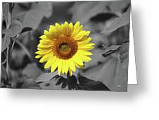 Star Of The Show - Standing Out Greeting Card
