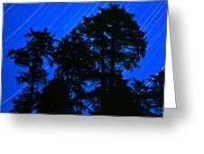 Star Trails Behind Ruby Beach Tree Group Greeting Card