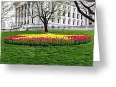 Star Tulips Greeting Card