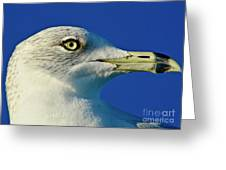 Intense Stare Greeting Card