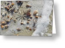 Starfish And Sea Shells Greeting Card