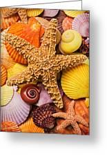 Starfish And Seashells Greeting Card by Garry Gay