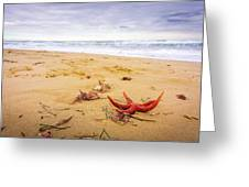 Starfish Greeting Card by Gary Gillette