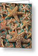 Starfish In Net Greeting Card by Garry Gay