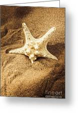 Starfish In Sand Greeting Card