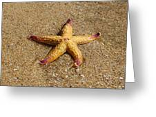 Starfish Greeting Card by Mamie Thornbrue