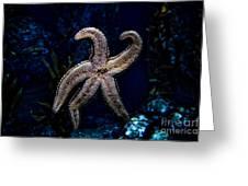 Starfish On Glass Greeting Card