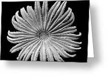 Starfish Transparency Greeting Card