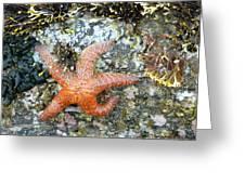 Starfish Running Greeting Card