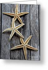 Starfishes In Wooden Greeting Card