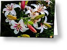 Stargazer Group Greeting Card