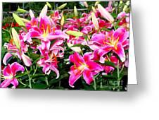 Stargazer Lilies #5 Greeting Card