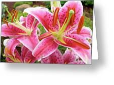 Stargazer Lilies At Their Best Greeting Card