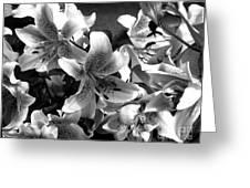 Stargazer Lilies Bw Greeting Card