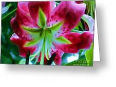 Stargazer  Greeting Card