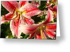 Stargazers In Evening Light Greeting Card