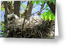 Staring From Its Nest Greeting Card