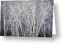 Stark Winter Greeting Card