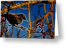Starling In Winter Garb - Fractal Greeting Card