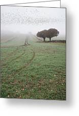 Starling Murtmuration In Foggy Misty Autumn Morning Landscape In Greeting Card