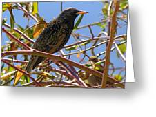 Starling With Sparrow Looking On Greeting Card