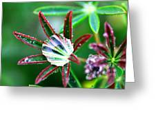 Starry Droplets Greeting Card