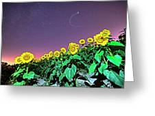 Starry Sky Over Colby Farm Sunflowers Newbury Ma Greeting Card