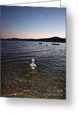Starry Sky Over Lake Tahoe Greeting Card